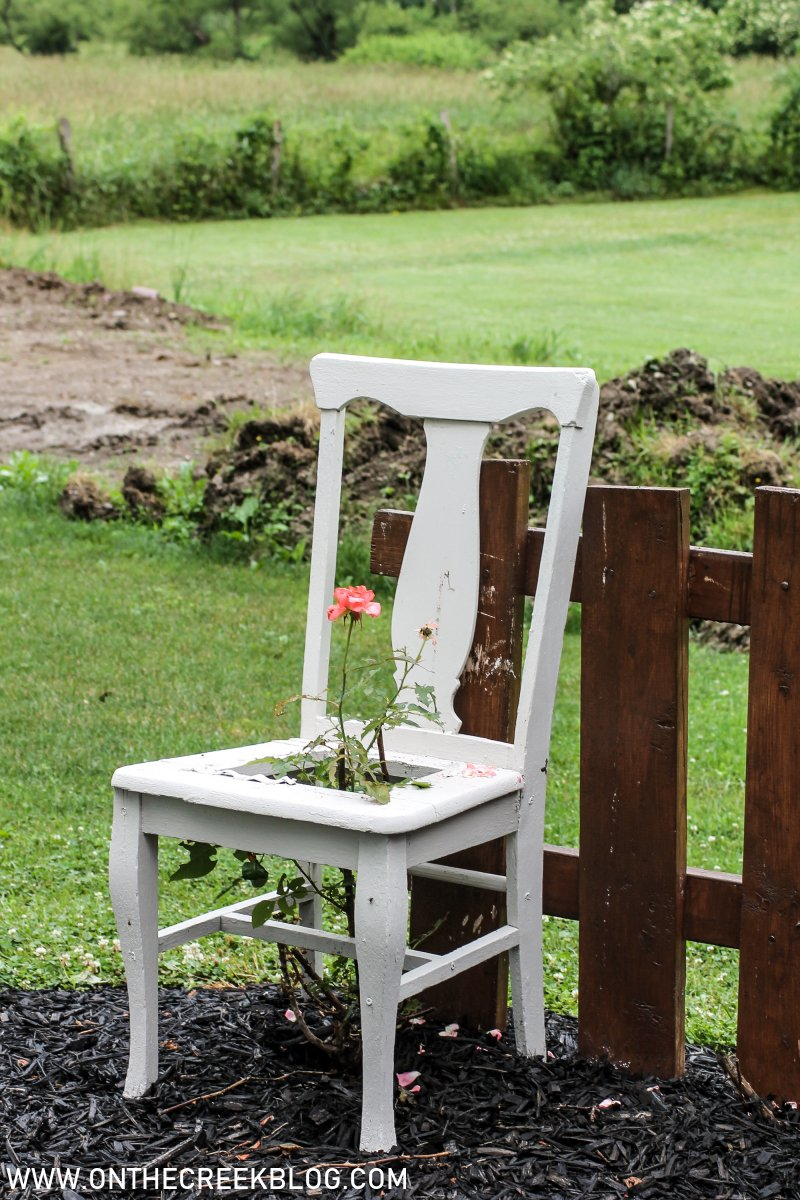 Climbing Roses in chairs | On The Creek Blog