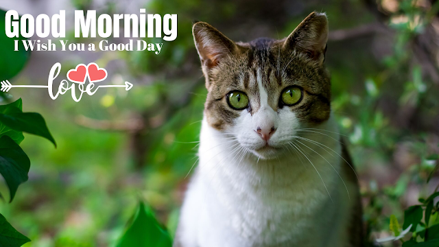 Good morning images with Nice Cat , Good morning Images