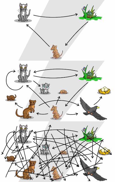 schematy zarażenia toksoplazmozą w świecie zwierząt