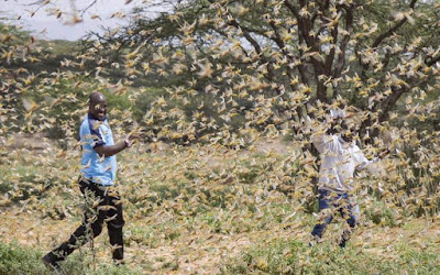 Locusts invasion in Somali and Pakistan becomes a national disaster. PHOTO | DW