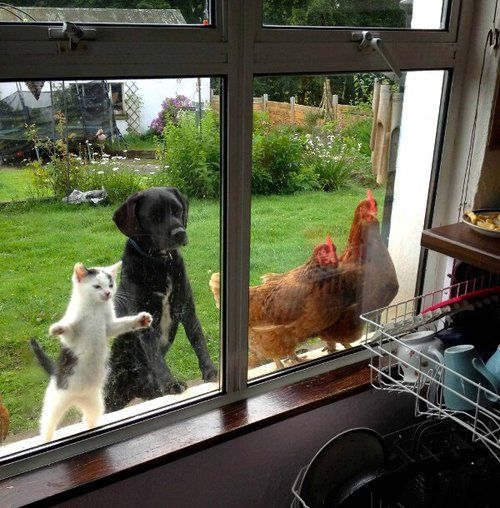 Funny curious animals looking in the window joke picture