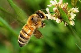 Arti Mimpi Lebah