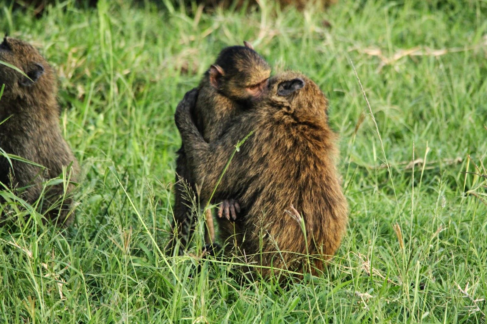 VER BEDUÍNOS NO SERENGETI - O amor anda no ar no Serengeti | Tanzânia