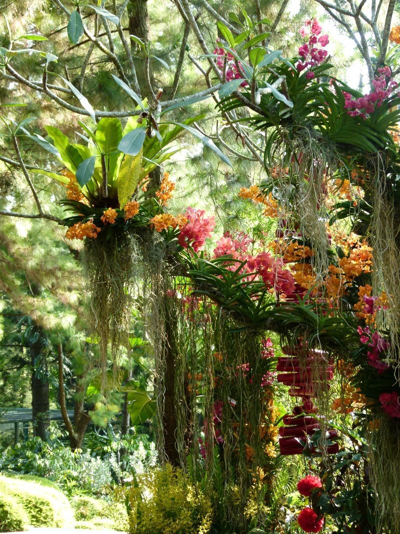 Jardín Botánico de Orquídeas Soroa