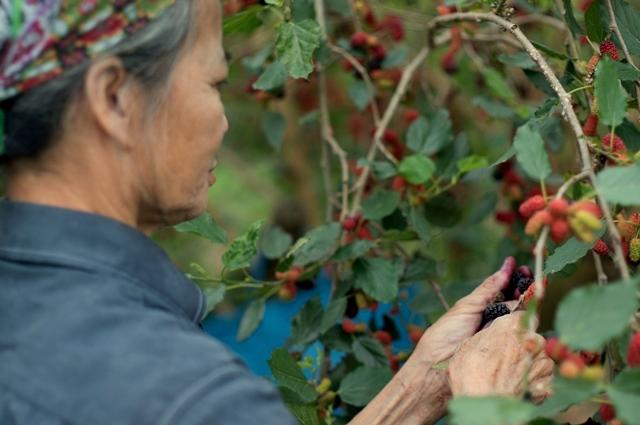 Mulberry: Summer starts in Hanoi 2