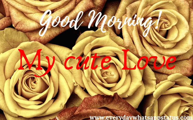 Good Morning Images with Love | Everyday Whatsapp Status | Good Morning Images HD Download