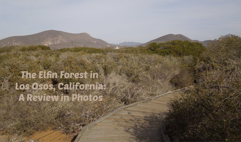 The Elfin Forest in Los Osos, California: A Review in Photos