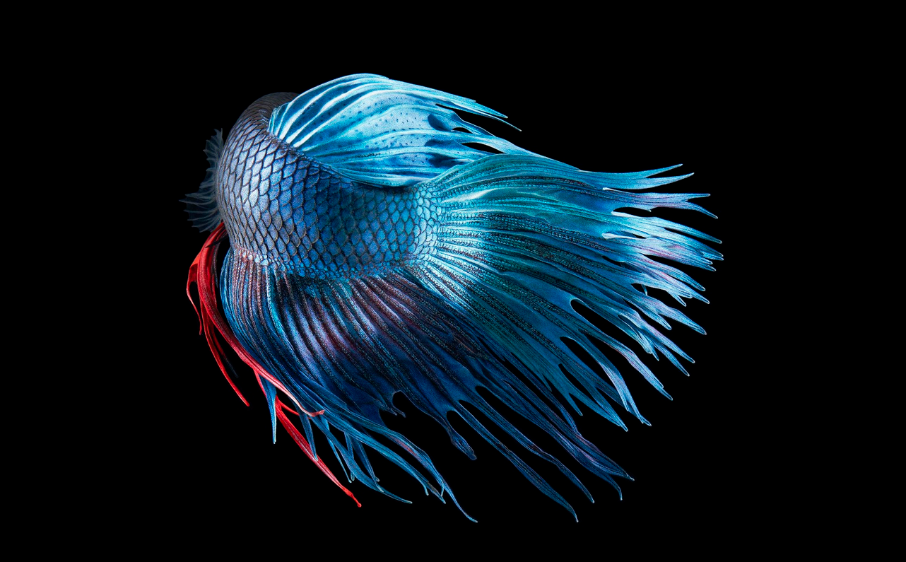 Tim Flach Photography Blue