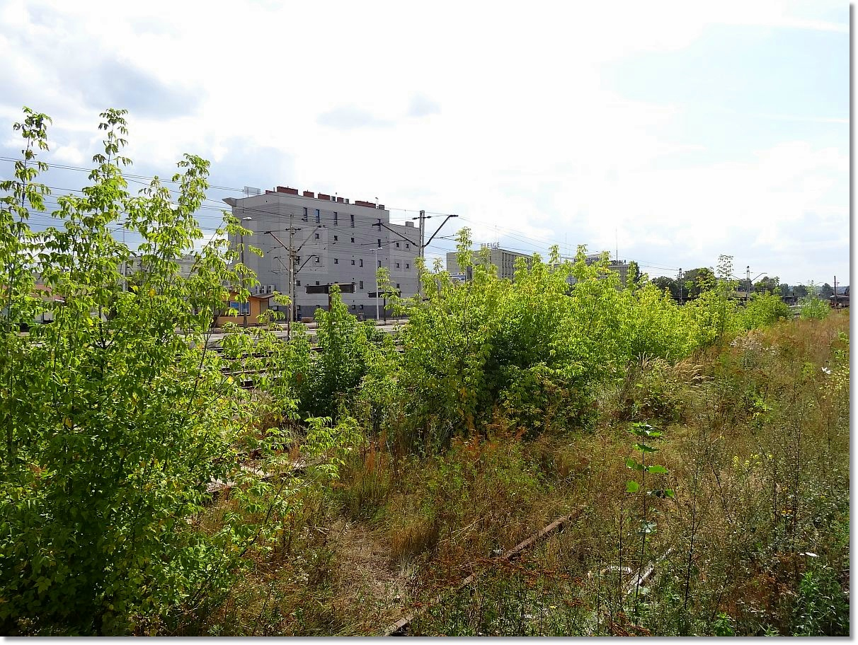Zarośnięta stacja Kielce