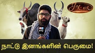 Facts of our Native Breeds – Dude Vicky | Saatai | Sembulam 2018 | IBC TAMIL