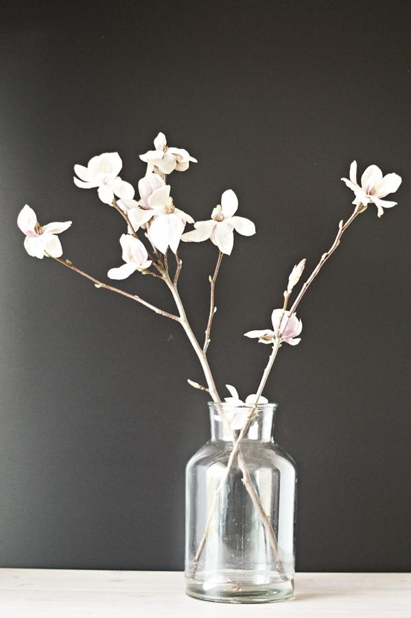 Zweig einer weißen Magnolie vor einer schwarzen Wand