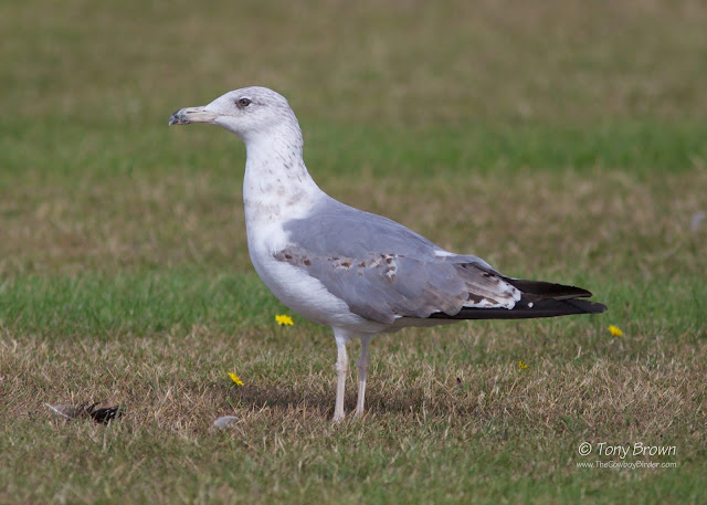 2nd-summer, Gulls, Wanstead, London
