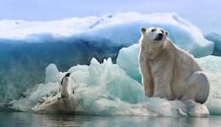 Perbedaan Hewan yang Tinggal di Kutub Utara dan Kutub Selatan