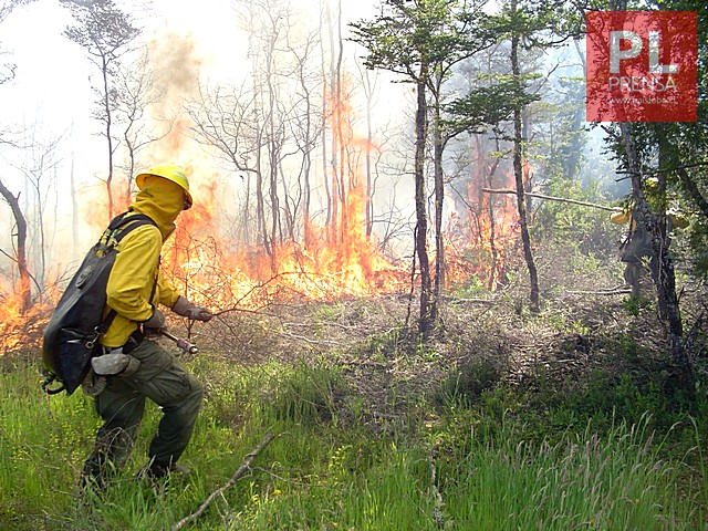 CONAF llama a postular para conformar brigadas forestales