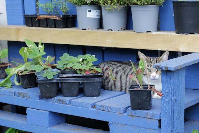 Blue Pallet Garden Bench