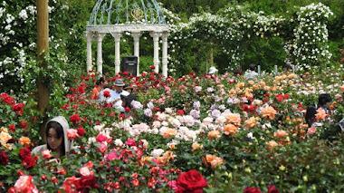 Rosaleda de Keisei, uno de los jardines de rosas más grandes del área metropolitana de Tokio