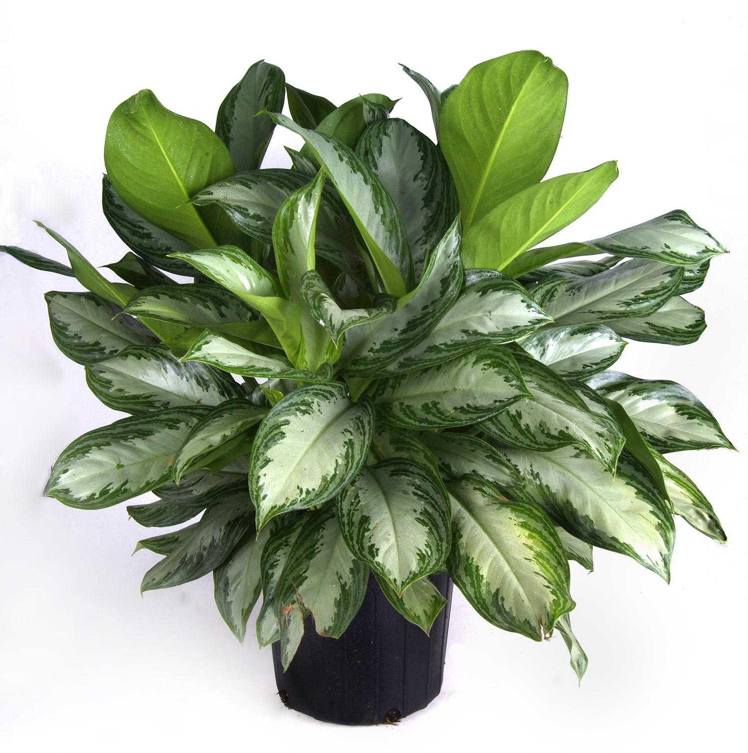 Indoor Houseplants: The Garden Plot: Tips For Bringing Your Houseplants Inside