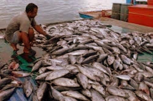 Kementerian Kelautan dan Perikanan (KKP) Tingkatkan Perikanan Maluku Sebesar Rp300 Miliar