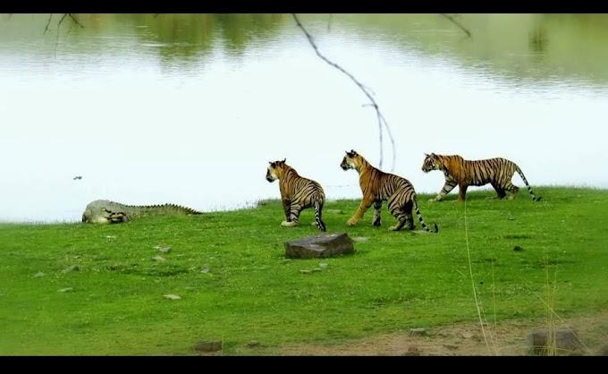 Ranathnbhaur National Park Sawai Madhopur