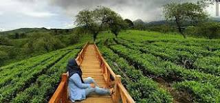 Kebun Teh Wonosari