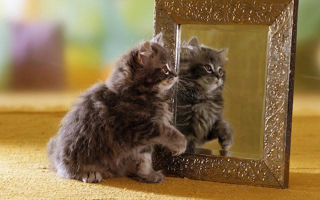 Kat ziet eigen spiegelbeeld in de spiegel