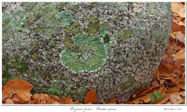 Dogtown forest: Granite canvas
