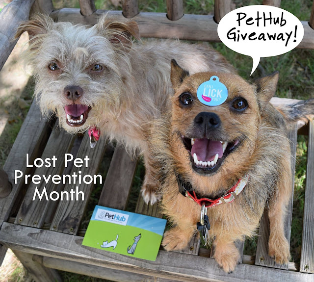 Giveaway: PetHub - Lost Pet Prevention Month
