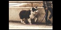 Dog in Germany