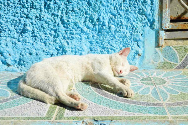 cat in the sun tangier