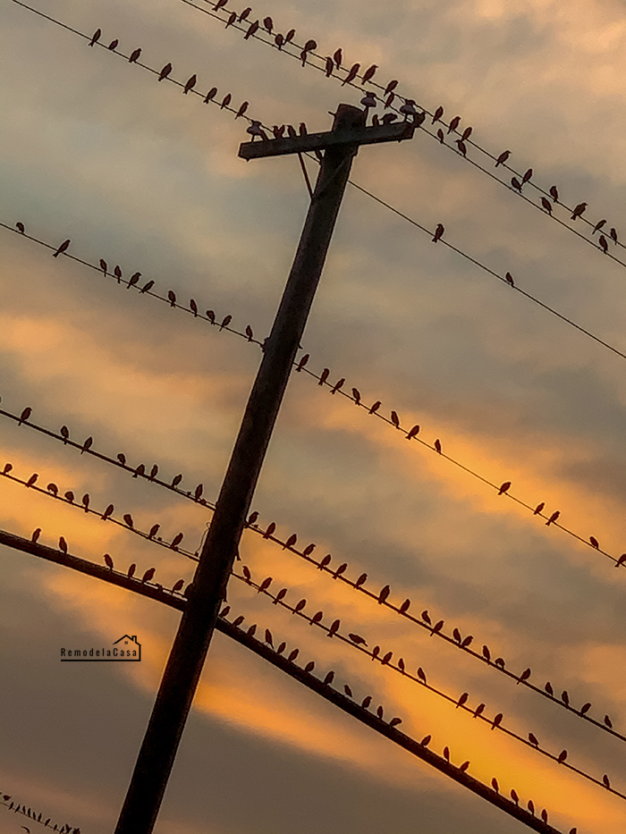 Why birds don't get electrocuted when sitting on power lines?