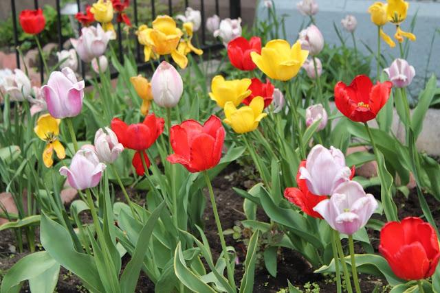 conjurer le printemps