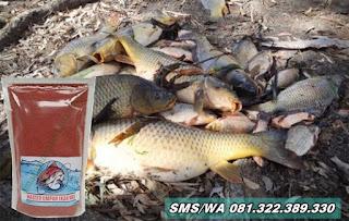 Umpan Ikan Mas Tombro Khusus Di Alam Liar