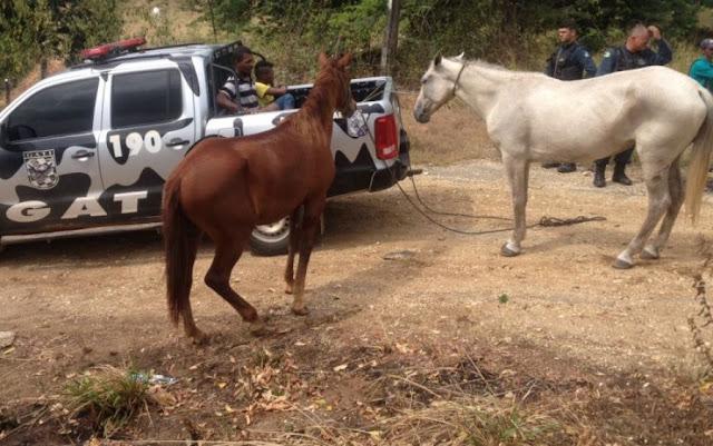 cavalo alazão e uma égua russa