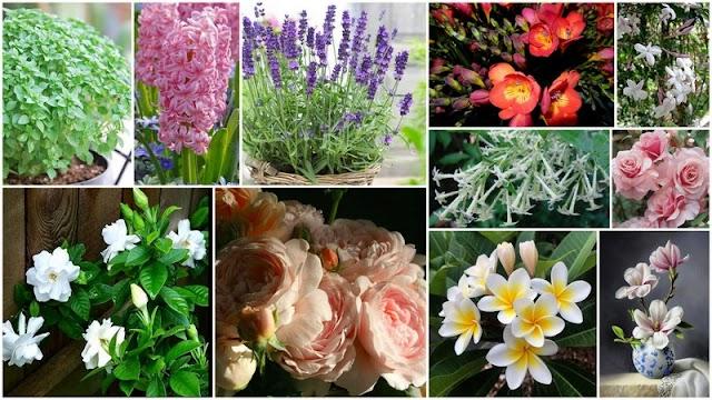 10 Φυτά με έντονο 'Αρωμα για τον Κήπο ή το Μπαλκόνι σας
