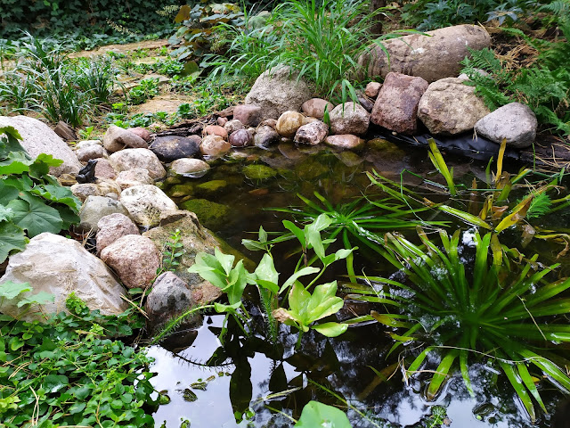 leśna sadzawka, małe oczko wodne