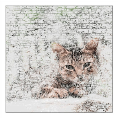 A generative art with cat photo that uses Vector Field method.