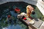 Taptapani Natural Hot Water Spring in Odisha, India