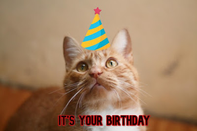 Funny Happy Birthday Memes With Cat