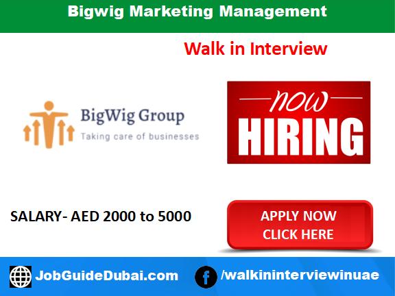 Bigwig Marketing Management career for Web Developer, App Developer, banking and Sales Executive job in Dubai UAE