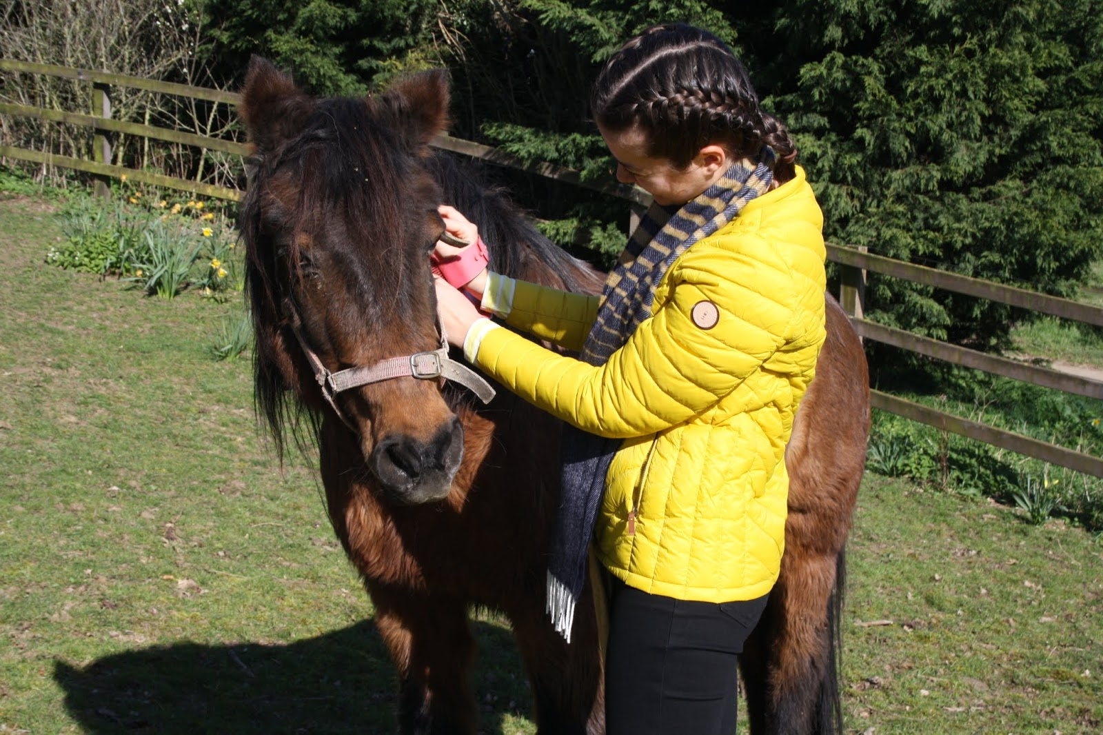 Abbey with Sophie, a fluffy New Forest Pony with black mane and brown coat