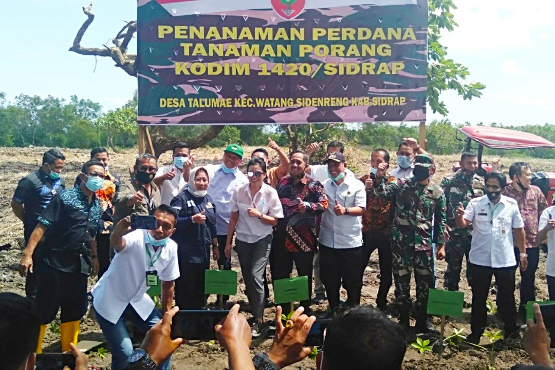 Penanaman Perdana Tanaman Porang di Desa Talumae, Kecamatan Wattang Sidenreng, Sidrap
