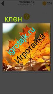 листок клена желтого цвета лежит на земле 15 уровень 400 плюс слов 2