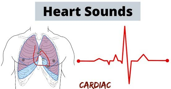 regular heart beat sounds,heart sounds locations, systolic murmur with absent s2, heart sounds quiz, heart sounds documentation, heart sounds lub dub, heart sounds slideshare, heart sounds s4, mechanism of s3 and s4, heart sounds location, lippincott heart sounds, third sound heart failure, split first heart sound, explanation of murmurs, what is a functional syncytium, loud first heart sound, heart murmur frequency range, s1 and s2 heart sounds location, normal heart sounds, heart sounds s3, heart sounds s1 s2 s3 s4, heart sounds ppt, heart sounds physiology, heart sounds pdf, heart sounds lub dub,