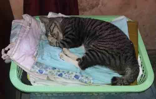 Ilustrasi Kucing Tertidur. Foto Asep Haryonoi / www.simplyasep.com