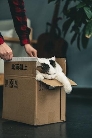 猫 in the Box