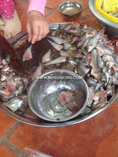 cá Thát Lát Tonle-sap