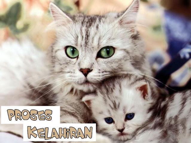 Kucing Melahirkan Berapa Anak