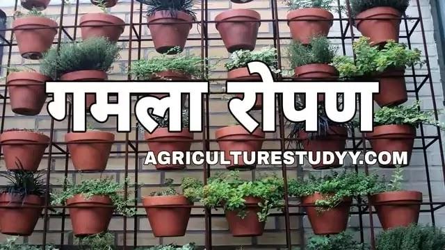 गमलों में पौधे कैसे लगाएं, गमलों के पौधों की देखभाल कैसे करें पूरी जानकारी, gamla in hindi, flower pot in hindi, pot in hindi, pot culture in hindi,