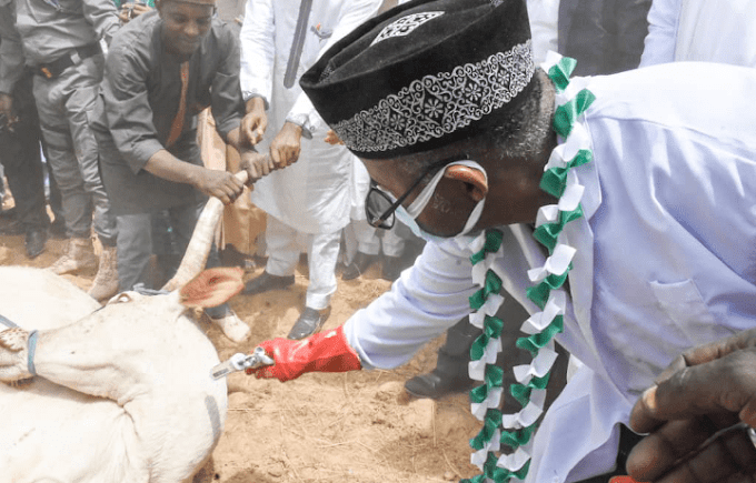 Bauchi releases N32m to vaccinate 800,000 cows