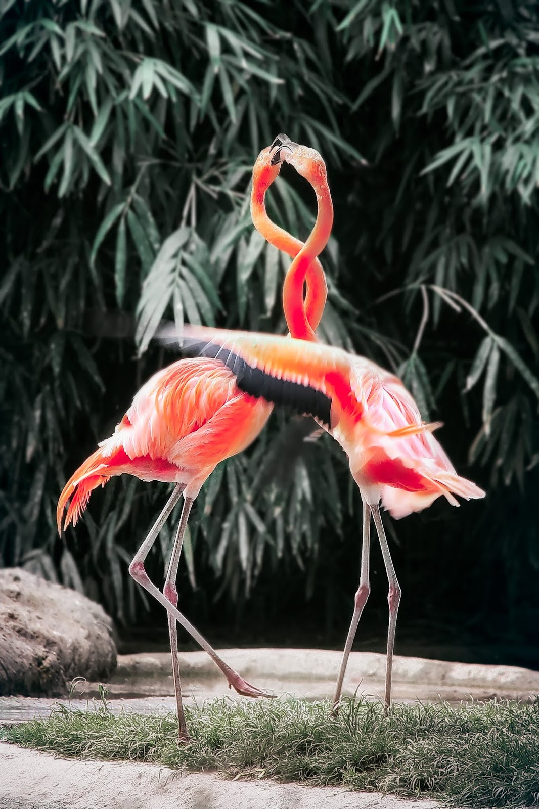 Flamingo one of the major orange beauty in world